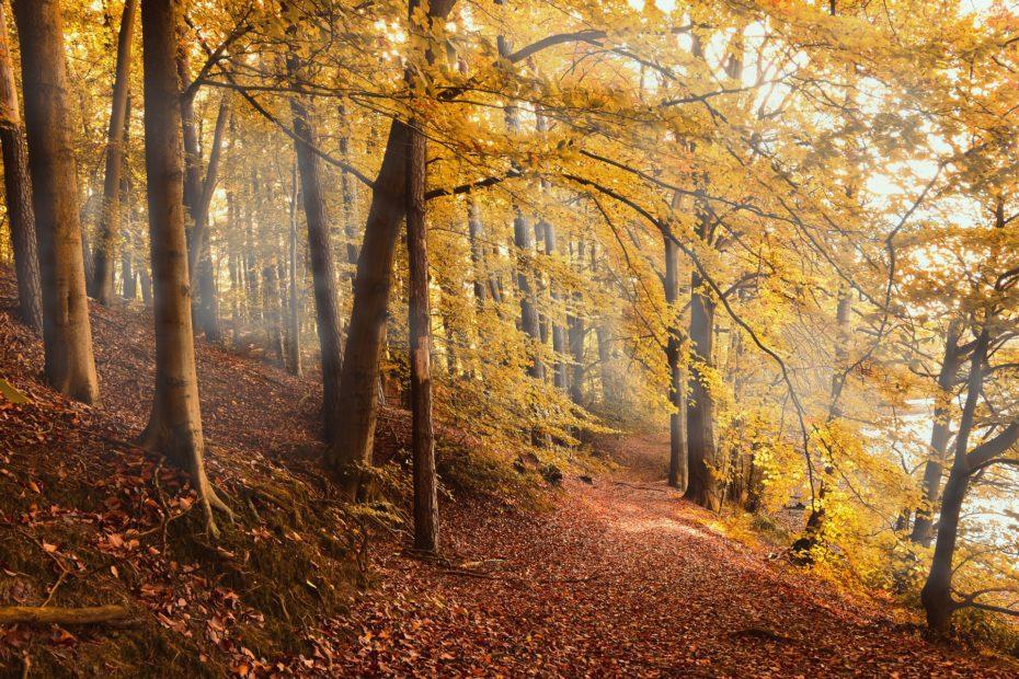 pixabay-autumn-2020
